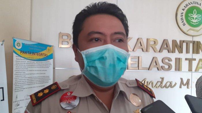 Marak Bahaya Jamur Enoki, Balai Karantina: Tak Ada Aktivitas Impor Masuk ke Tarakan Kalimantan Utara