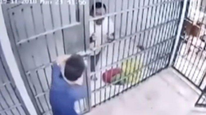 VIDEO VIRAL - Seperti Film Komedi, Tahanan Kelabui Petugas dengan Ular