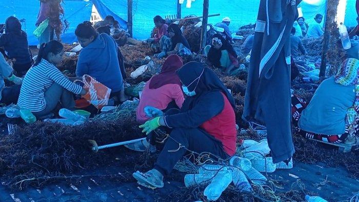 Kisah Petani Rumput Laut di Nunukan, 10 Tahun Andalkan Bekas Botol Plastik dalam Budidaya
