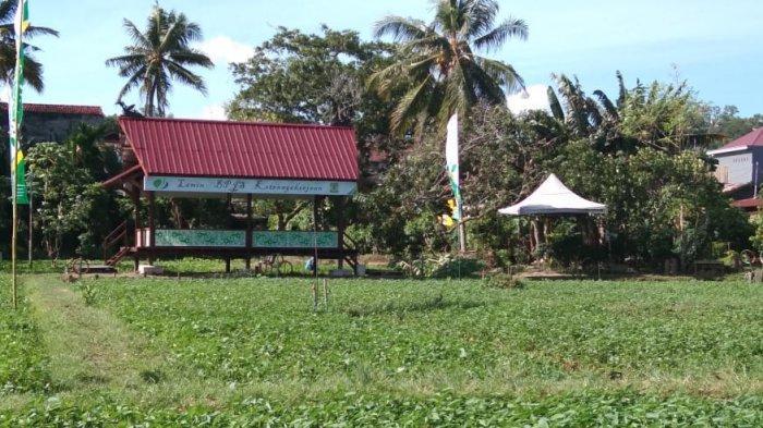 TRIBUN TRAVEL Wisata Edukasi Kang Bejo Balikpapan Munculkan Lamin Etam, Wisatawan Bebas Bersantai