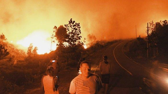 Kebakaran Hutan di Berau Makin Meluas dan Mulai Merembet ke Pemukiman, Warga Evakuasi Diri