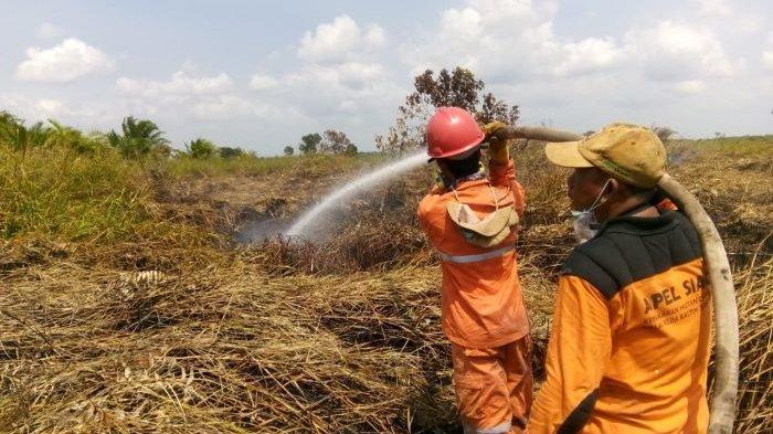 2 Perusahaan Kebun Kelapa Sawit Disegel Kepolisian, 60 Tersangka Diringkus jadi Pelaku Karhutla