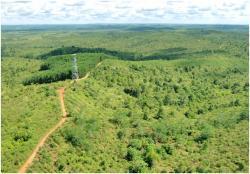 Selamatkan Hutan dan Orangutan di Samboja Lestari