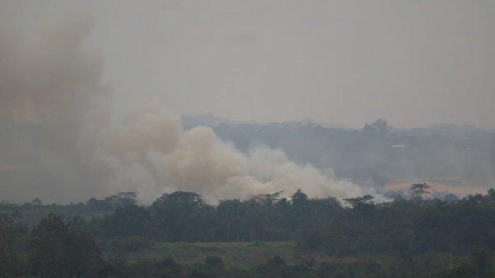 BREAKING NEWS - Kebakaran Lahan Dekat Bandara APT Pranoto Samarinda Tanpa Penanganan, Ini Alasannya