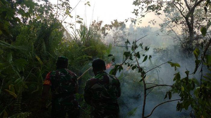 BREAKING NEWS Pagi Ini Kebakaran Hutan Landa Gunung Seteleng Penajam, Tim Bersiap ke Lokasi