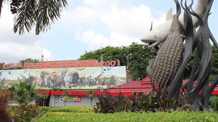 Kebun Binatang Surabaya Memiliki Sekira 351 Jenis Satwa, Ini Harga Tiket Masuk dan Cara Membelinya