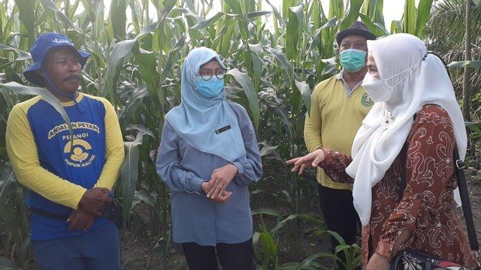 Penerima Program Pertanian Keluarga Wajib Lapor 3 Tahun