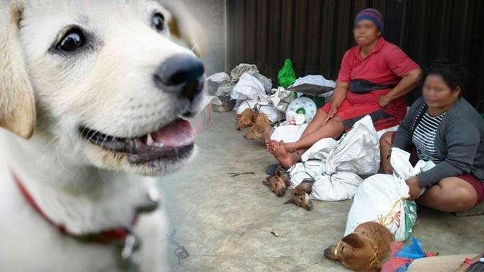 Fakta Memilukan Anjing-anjing yang Dilego di Pasar Indonesia hingga Berakhir di Sebuah Piring