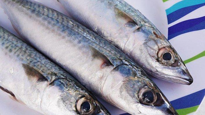 Tidak Banyak yang Tahu, Ini Manfaat Ikan Makarel Bagi Kesehatan, Bisa Menurunkan Risiko Diabetes