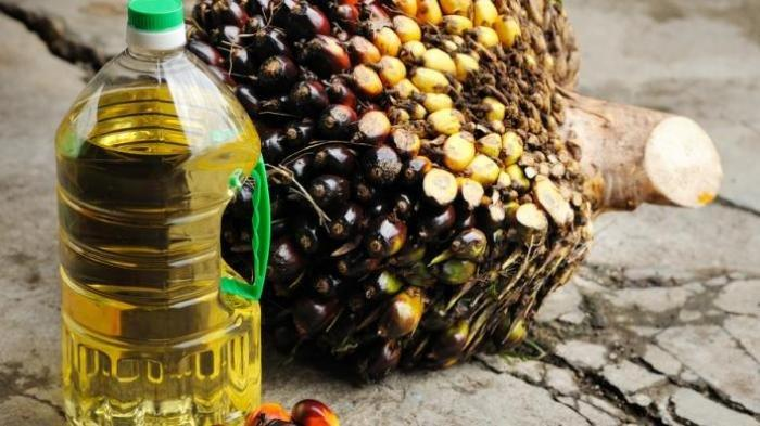 Berbahaya untuk Kesehatan, 4 Jenis Minyak yang Sebaiknya Tidak Digunakan untuk Memasak Makanan