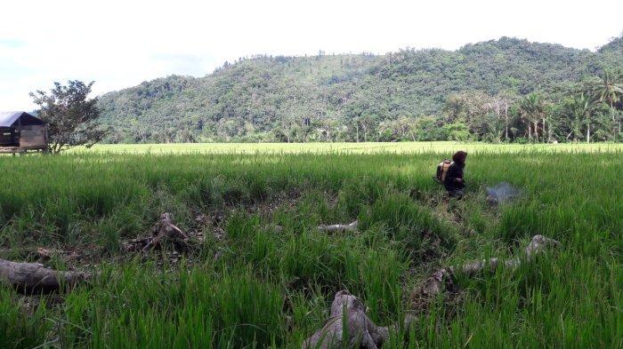 Lahan Pertanian Terbatas di Tarakan, Walikota Khairul Akui Belum Bisa Swasembada Penuh