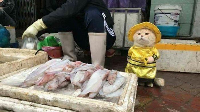 Kucing Lucu Ini Setia Temani Majikannya Berjualan Ikan di Pasar, Lihatlah Foto-fotonya Bikin Gemas