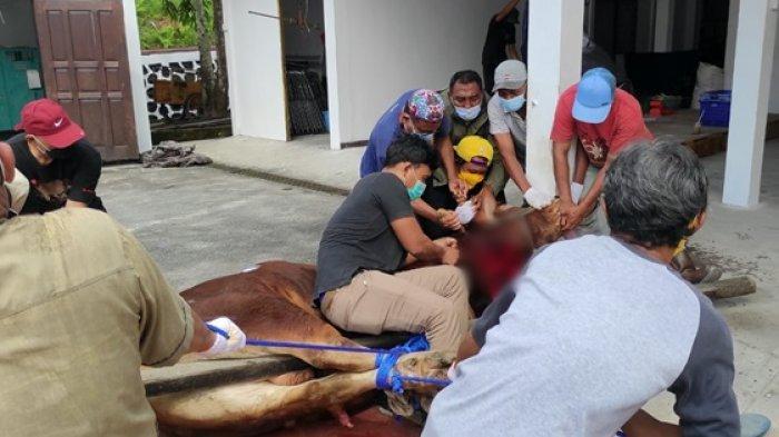 Penyembelihan hewan kurban di rumah jabatan wali kota, Jalan Syarifuddin Yoes, Rabu (21/7/2021).