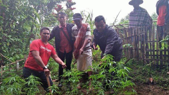 Wow, Obyek Wisata Lemo Ditemukan Ladang Ganja