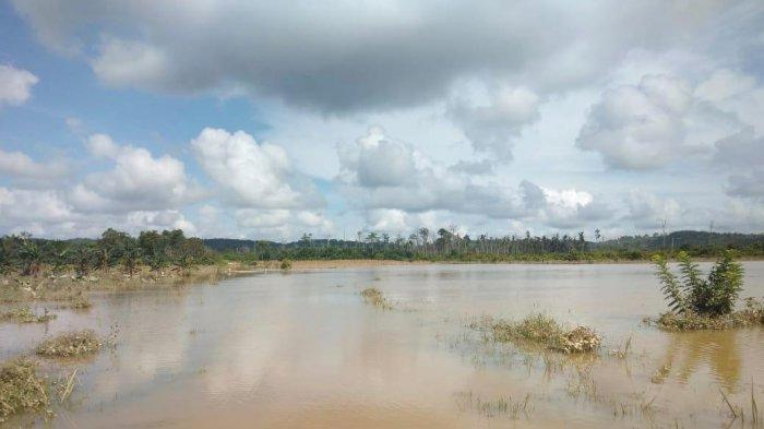 Banjir di Berau, Hanya Rugi Benih, Kampung Tumbit Melayu Sudah Melewati Masa Panen