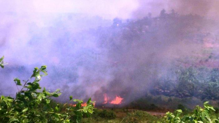 VIDEO - Kebakaran di Bontang, Lahan di Dekat Valve Jaringan Induk Pipa Pertagas Terbakar