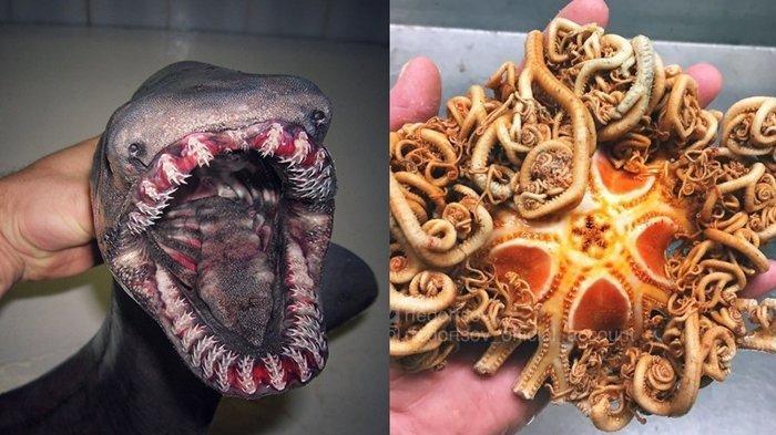 8 Potret Makhluk Mengerikan Penghuni Laut Dalam yang Berhasil Ditangkap Nelayan Ini