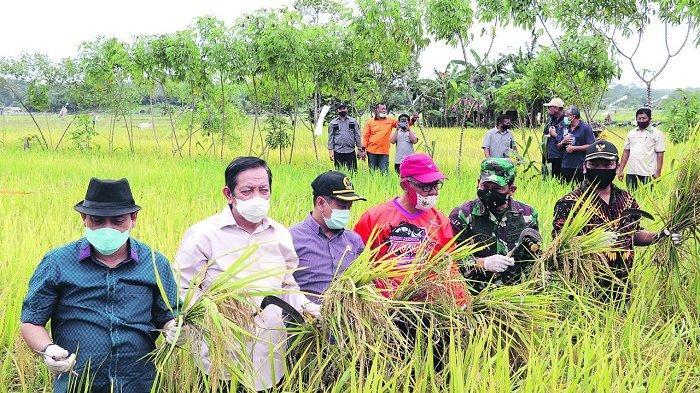 Miliki 1.000 Ha Lahan Pertanian, Makmur HAPK Sebut Samboja Berpotensi Lumbung Pangan IKN