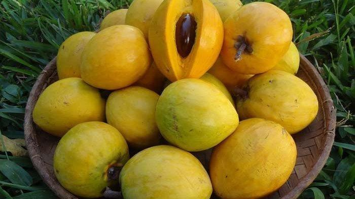 Mengenal Sawo Mentega, Salah Satu Jenis Buah Sawo yang Banyak Mengandung Vitamin C