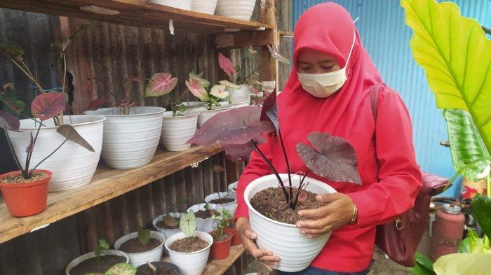 Erna (32), seorang ibu yang telah memiliki dua anak itu sudah menyukai tanaman hias sejak 3 tahun lalu banyak koleksi bunga hias miliknya di rumahnya, di Penajam Paser Utara, Kalimantan Timur.