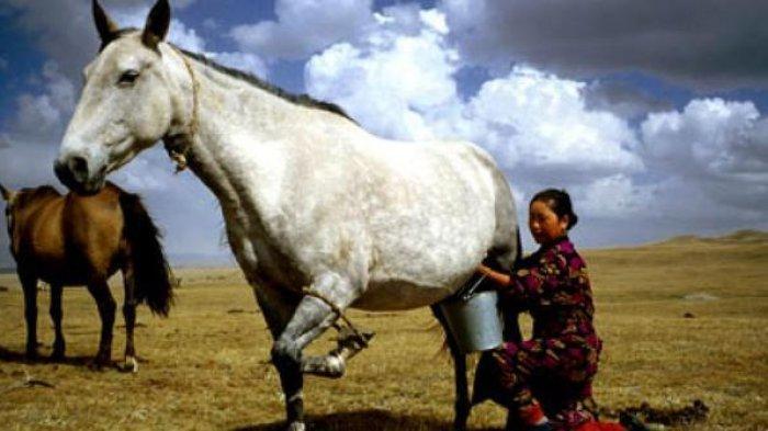 Melancarkan Pencernaan hingga Baik untuk Kecantikan, Inilah 5 Manfaat Susu Kuda untuk Kesehatan