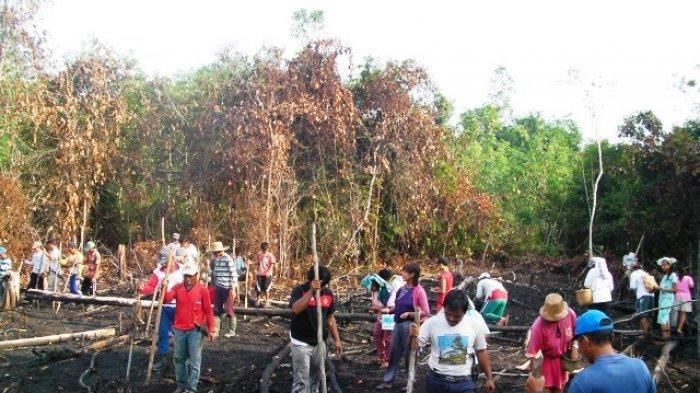 Warga Kampung Karangan Kutai Barat Gotong Royong Tanam Padi
