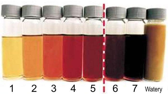 Ilustrasi patokan warna oli mesin layak pakai yakni 1-5 dan harus diganti.