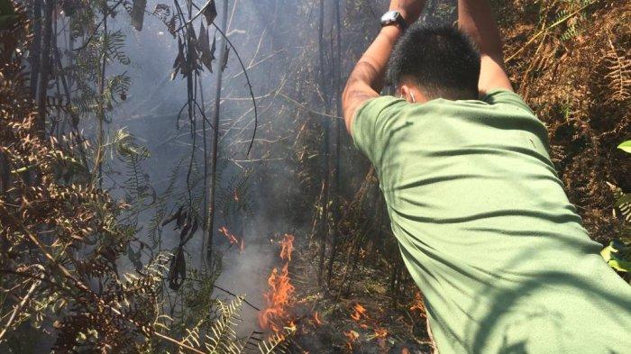 Ditjen Gakkum KLHK Segel 10 Lokasi Karhutla di Kalimantan Barat, Ada Lahan Milik 7 Perusahaan