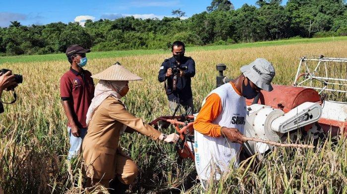 3 Pilar Keamanan Pangan Malinau, Tantangan Kesehatan dan Pemulihan Ekonomi kala Pandemi Covid-19