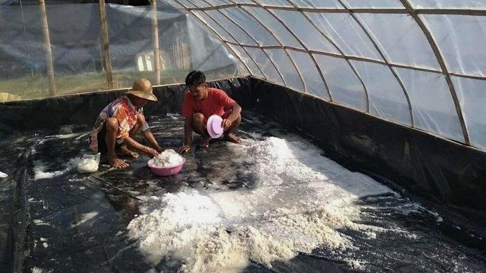 Pemerintah Impor 3 Juta Ton Garam, KPPU Tegaskan Potensi Excess Supply Garam Lokal