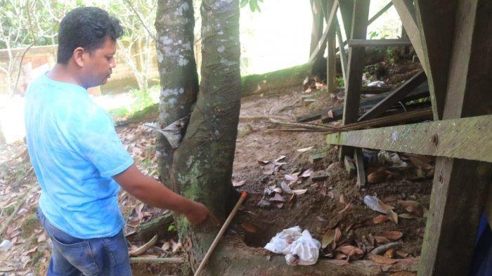 BREAKING NEWS - Masih Merah dan Basah, Orok Berusia 5 Bulan Ditemukan di Bawah Pohon Cempedak