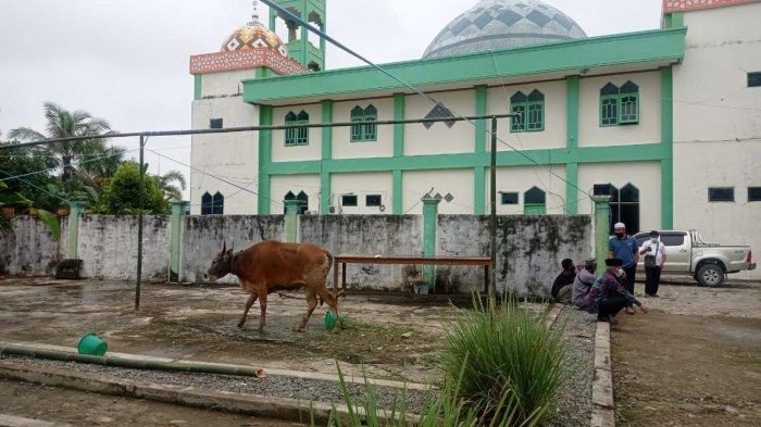 Momen Idul Adha Topang Sektor Peternakan di Malinau, Penjualan Hewan Kurban Naik Sedikit