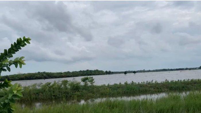 50 Ha Lahan Pertanian di Babulu Penajam Paser Utara Terancam Gagal Panen Akibat Banjir dari Longkali