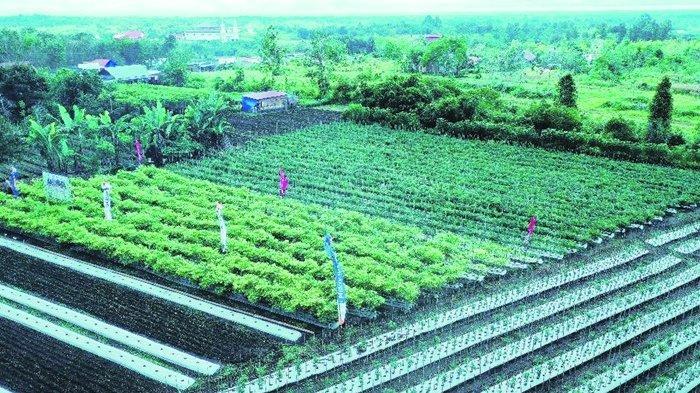 6 Sayur Ini Cocok di Musim Hujan, Perhatikan Cara Pemupukan Agar Tumbuh Subur dan Sehat