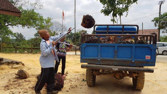 Serikat Petani Kelapa Sawit Beri Saran Pemerintah, Perlu Evaluasi Implementasi B30