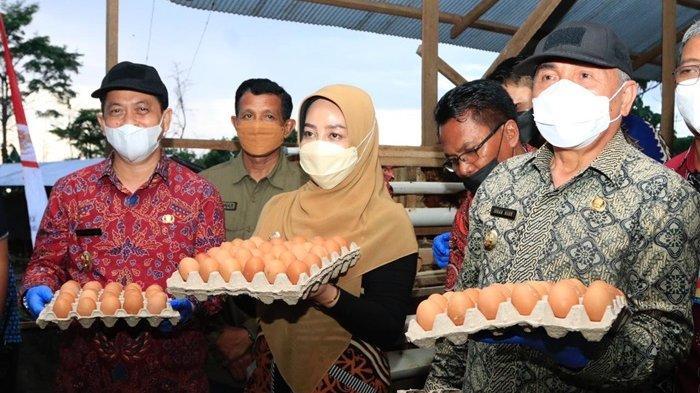 Hari Kedua Kunker, Gubernur dan Wagub Melihat Potensi Besar Bisnis Ayam Petelur di Labanan Makarti