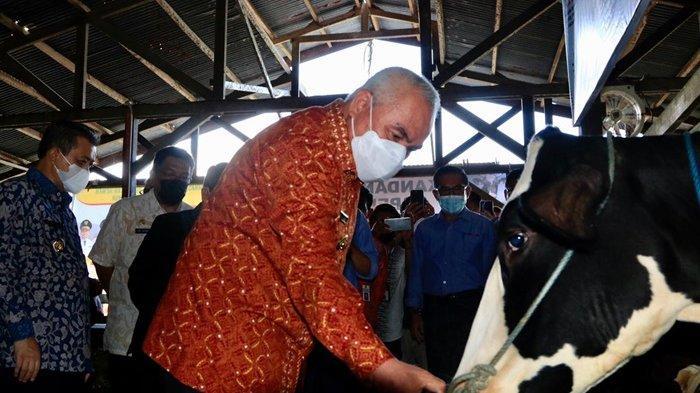 Harus Jadi Contoh Daerah Lain, Gubernur dan Wagub Kunjungi Peternakan Sapi Terpadu dan Tanam Rambai