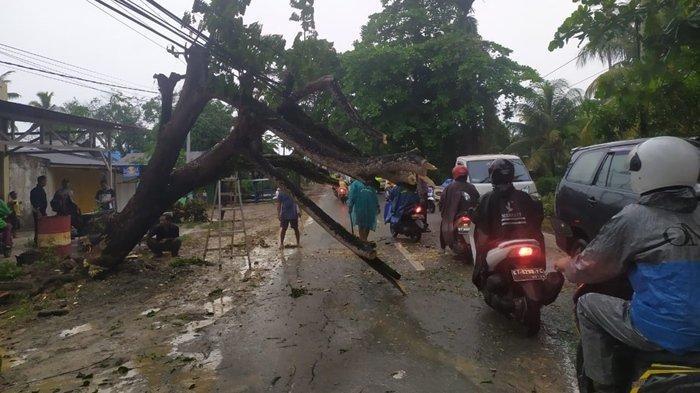 Hujan Deras dan Angin Kencang, Pohon Tumbang di Jl Mulawarman Balikpapan, Arus Lalin Macet