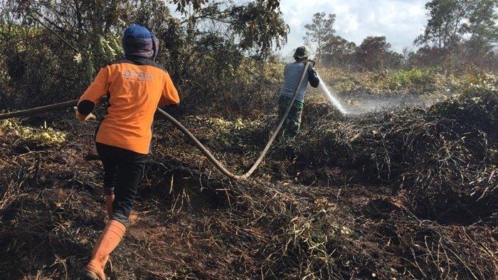 300 Hektar Lahan Terbakar selama 2019 BPBD Kabupaten ini Catat 59 Kasus Karhutla