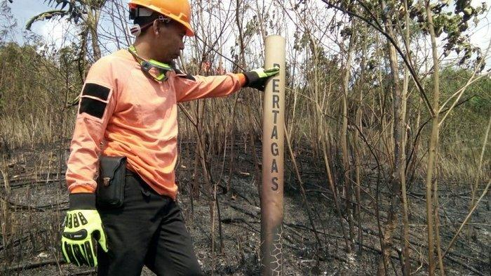 Dalam 2 Pekan, 15 Hektare Hutan dan Lahan di Kota Bontang Terbakar,Termasuk Area Jalur Pipa Gas