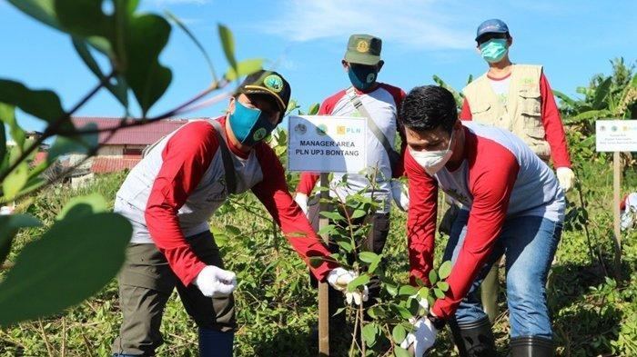Sedikitnya ada 2021 bibit mangrove yang telah ditanam sebagai upaya dalam melestarikan ekosistem alam.