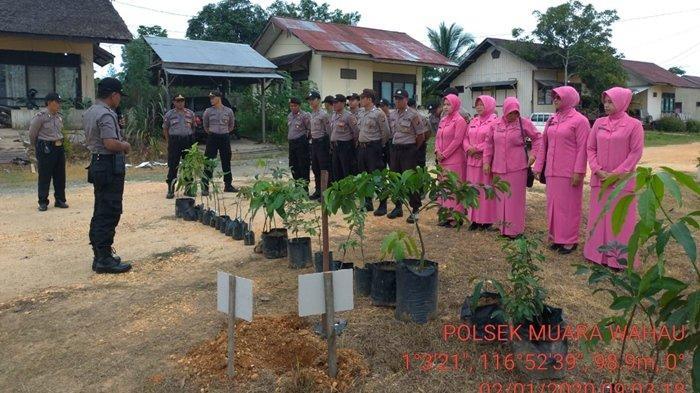 Polsek Muara Wahau Kutai Timur Tanam 21 Pokok Pohon Buah Di Pekarangan Halaman All Tribun Kaltim