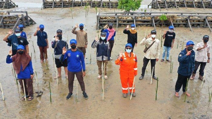 Kembangkan Ekowisata Lokal, Pertamina Hulu Kalimantan Timur Tanam 10.000 Mangrove di Pantai Kersik