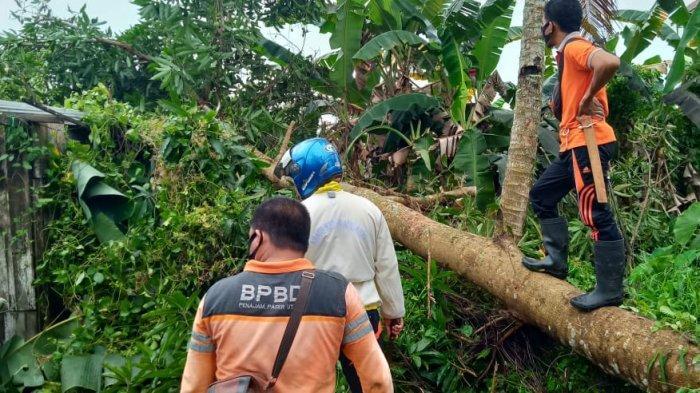 Angin Kencang Terjang Rumah Warga Penajam, Satu Bangunan Tertimpa Pohon