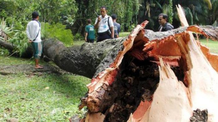 Antisipasi Pohon Tumbang, DKPP Lakukan Pemangkasan di Kawasan Jalan Provinsi