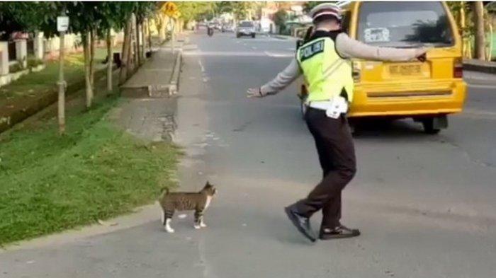 Polisi Ini Bantu Seekor Kucing Menyeberangi Jalan, Lucunya Si Kucing Nurut
