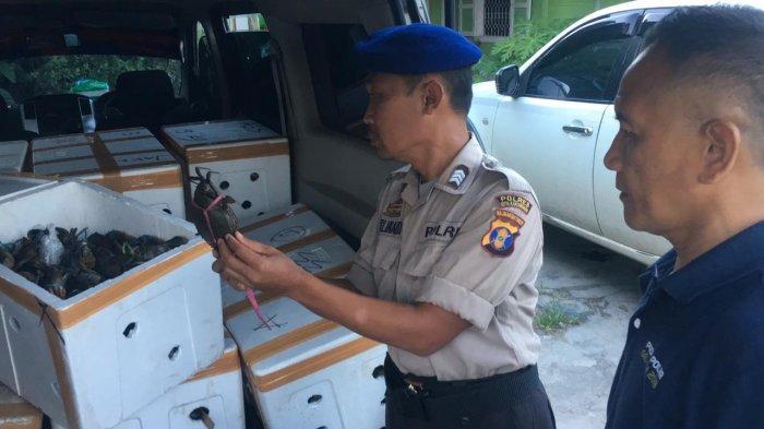 Penyelundupan 1.200 Ekor Kepiting Bertelur ke Malaysia, Digagalkan Satpolair Polres Kukar