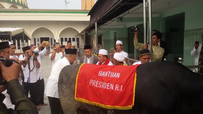 Kabupaten Ini juga Kebagian Sapi dari Presiden Jokowi
