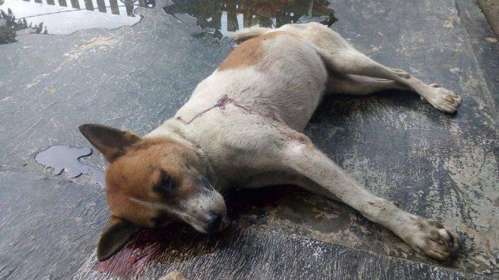 Seekor Anjing di Balikpapan Ditembak Oknum Tak Dikenal, Pemilik Menduga Jadi Bahan Konsumsi