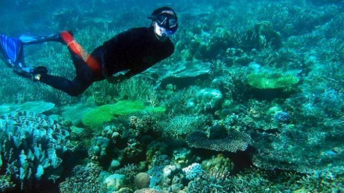 Pulau Bokori di Sulawesi Tenggara Miliki Eksotika Bawah Air Saingi Pesona Raja Ampat di Papua